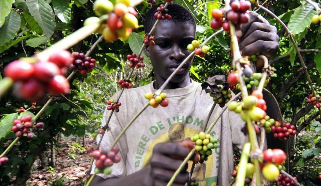 sidamo – aleta wendo coffee